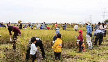 一般の農薬を使わない漢方農法で作った 埼玉県加須市・誠農社の低GI食品のお米・玄米をご紹介