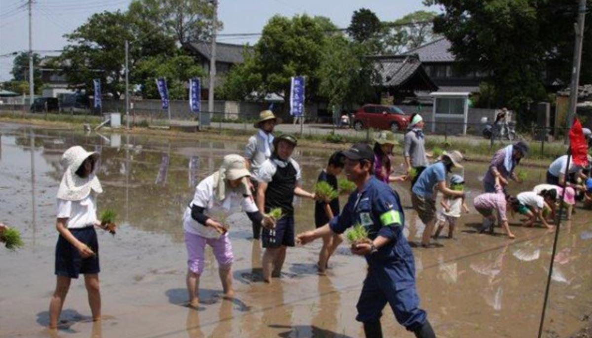 食育に最適な米作り体験を自然豊かな埼玉県加須市で。四季を感じる稲作農業。収穫したお米が美味しい! 埼玉県加須市 誠農社