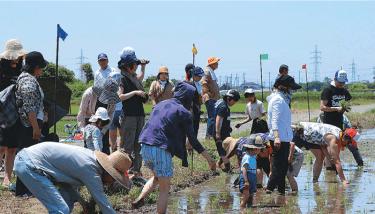 【久喜近隣・加須市】「豊かな田んぼ守り隊」参加者募集中