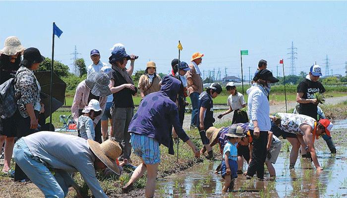 農時新聞:田植えの様子